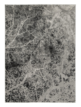 Picture of Cailey 8x10 Rug